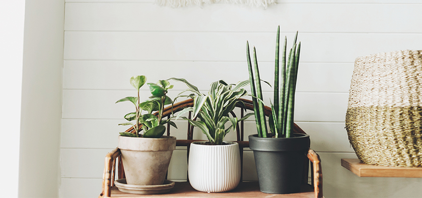 house plants on a bench