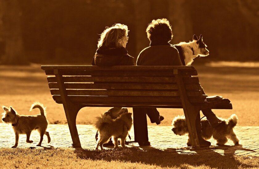 Texas city installs video surveillance amid dog abandonment problem | 2021-01-15